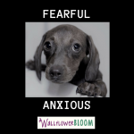 fearful-puppy-via-canva-by-tommeka-s